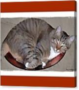 Kitty In A Bowl Canvas Print
