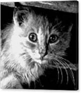 Kitty In Black White Canvas Print