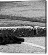 Kitty In The Street Black And White Canvas Print