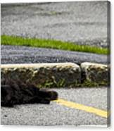 Kitty In The Street Canvas Print