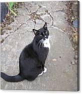 Kitty Kitty Kitty Canvas Print