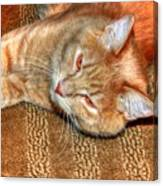 Kitty Relaxing Canvas Print