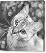 Kitty The Cat Canvas Print