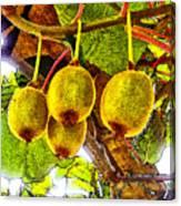 Kiwis In Kiwiland Canvas Print