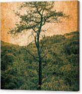 Knarly Tree Canvas Print