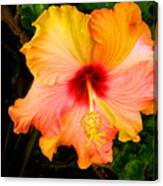 Knightsbridge Hibiscus Canvas Print