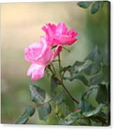 Knock Out Rose Canvas Print