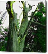 Knotty Tree Canvas Print