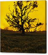 Koa Tree Silhouette Canvas Print