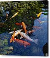 Koi - Dsc00016 Canvas Print