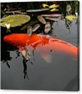 Koi Fish 4 Canvas Print