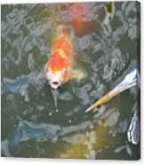 Koi And Great Blue Heron Canvas Print