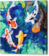 Koi Family Canvas Print