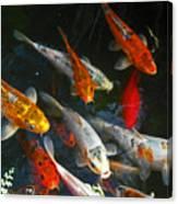 Koi Fish IIi Canvas Print