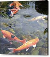 Koi In Pond II Canvas Print
