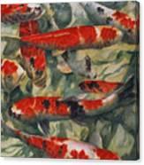 Koi Karp Canvas Print