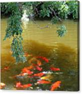 Koi Party Canvas Print