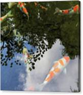 Koi Pond Reflection Canvas Print