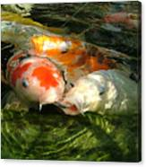 Koi Ripples Canvas Print