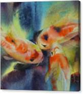 Koi Series Koillision Canvas Print