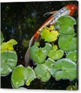 Koi With Lily Pads A Canvas Print