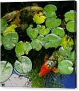 Koi With Lily Pads D Canvas Print