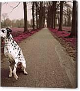 Kokkie On The Autumn Alley Of Rhoon Canvas Print