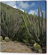 Koko Crater Cacti Canvas Print