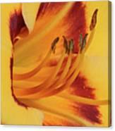 Kokomo Sunset 05 - Daylily Canvas Print