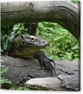 Komodo Dragon Creeping Through Two Fallen Logs Canvas Print