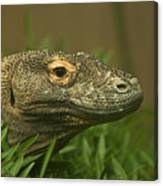 Komodo Dragon Canvas Print
