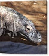 Komodo Kountry Canvas Print
