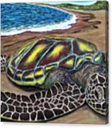 Kona Turtle Canvas Print
