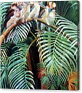 Kookaburra Perch Canvas Print