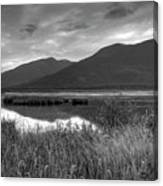 Kootenay Marshes In Black And White Canvas Print