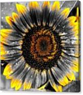 Krypton's Sun Flower Bwy Canvas Print