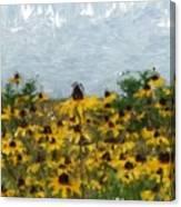 Krystallyn's Susans Canvas Print