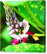 Kudzoo Flower Canvas Print