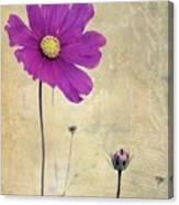 L Elancee - V04t3 Canvas Print