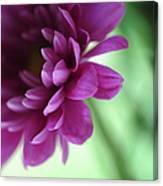 La Fleur De L' Amour Canvas Print