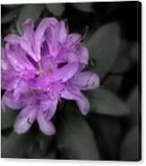 La Fleur Pourpre Canvas Print