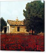 La Masseria Tra I Papaveri Canvas Print