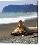La Push Beach  Canvas Print