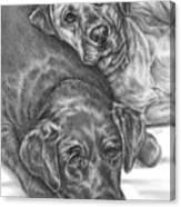 Labrador Dogs Nap Time Canvas Print