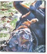 Labrador Retriever Chocolate Fun Canvas Print