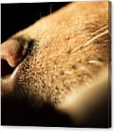 Labrador Scent Canvas Print