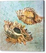Lace Murex Canvas Print