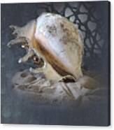 Lace Murex Sea Shell In Blue 2 Canvas Print
