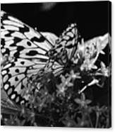 Lacy Black And White Canvas Print