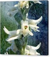 Ladies-tresses Orchid Canvas Print